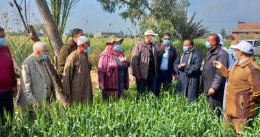 صورة الزراعة تعلن ارتفاع المساحات المنزرعة بالقمح لــ 3 ملايين و420 ألف فدان